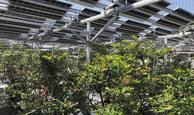 営農用太陽光でも自家消費